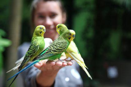 7 Gründe, warum Vögel großartige Begleiter für das richtige Zuhause sind